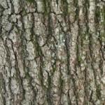 Tree identification - bark