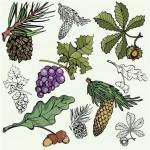 varieties of tree fruit